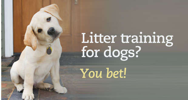 dog litter training