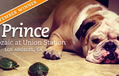 pet of the month - september 2012