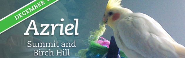 Azriel - December Pet of the Month