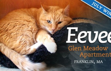 Pet of the Month - July