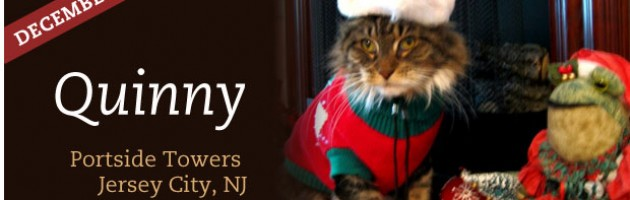Pet of the Month - Quinny