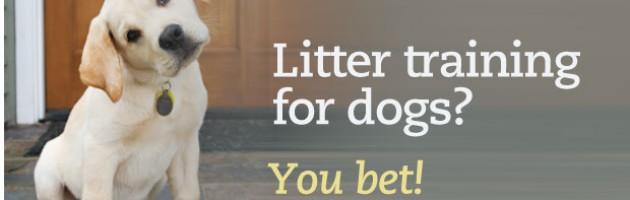 dog litter training