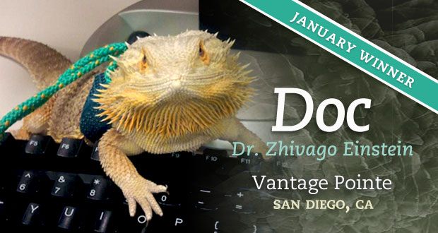 Doc - January 2013 Pet of the Month
