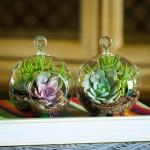 http://www.etsy.com/listing/168375395/mini-succulent-terrarium-duo-kit-perle?ref=shop_home_active_11