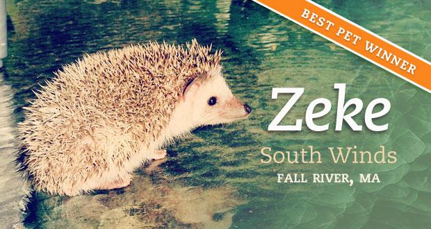 Best Pets - October - Zeke